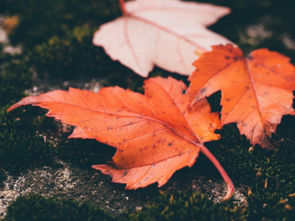 Preparing for the Change of Seasons with Dementia.